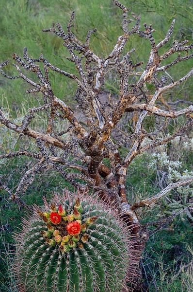 20180902-Saguaro-NP-East-4279.jpg