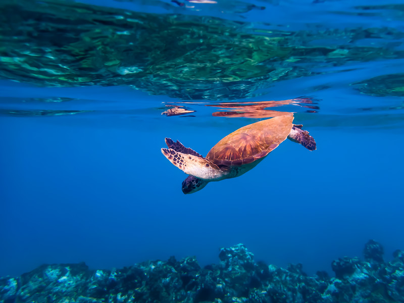 Turtle of Light and Color
