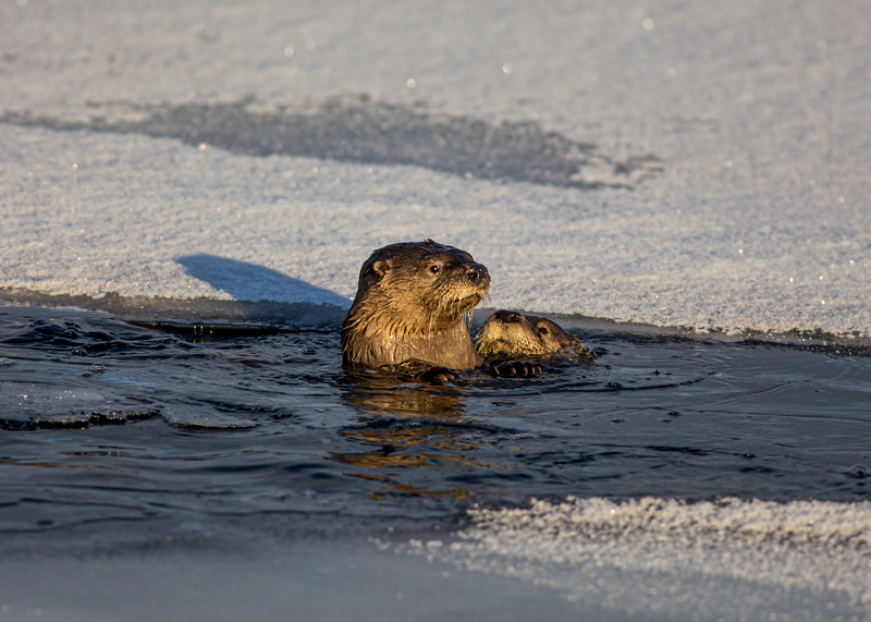 Otters Narrows 12-22-19.jpg