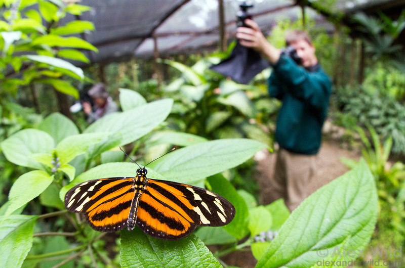 Participants of a recent BugShot program photograph captives at the Green Hills Butterfly Ranch.