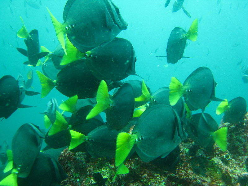 Diving in the Galapagos (195 of 392)