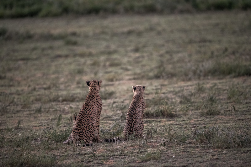Tanzania_Feb_2018-114.jpg