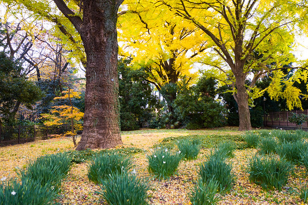 Colors of Japanese Autumn