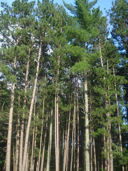 Destination-Chippewa National Forest, MN