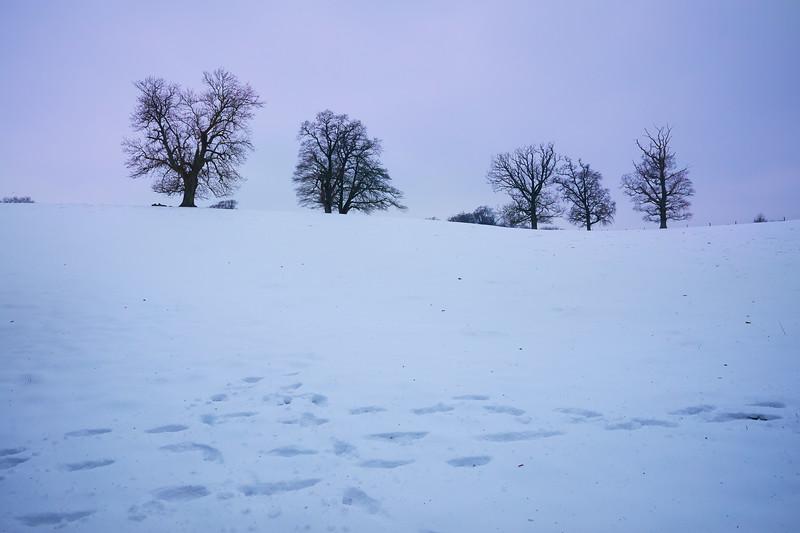 Snow Mar18 09.jpg