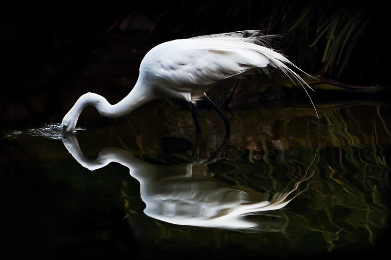 Reflective Silence