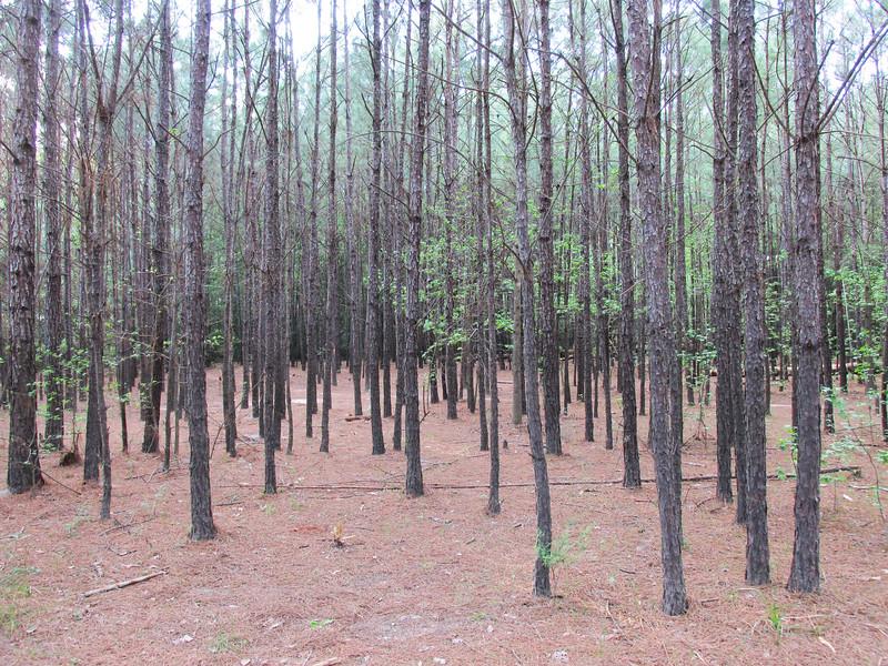 Cypress Creek Pines