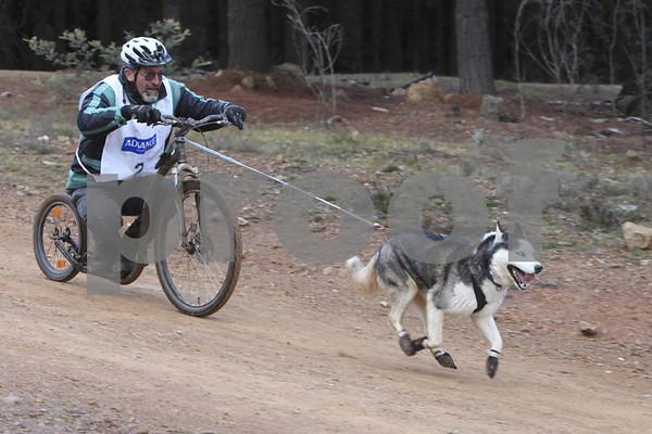 Kowen 2010 - Saturday 1 dog