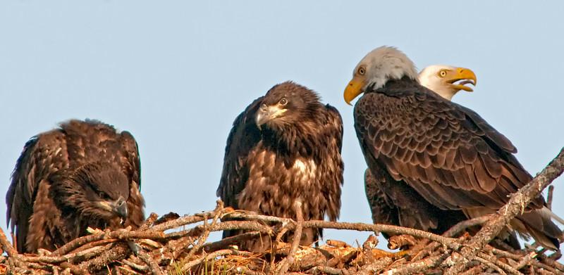 Palm Bay Eagle's Nest Feb 24, 2011