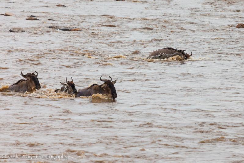 North_Serengeti-49.jpg