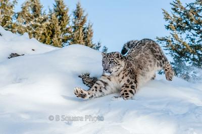 Winter Wildlife Photography