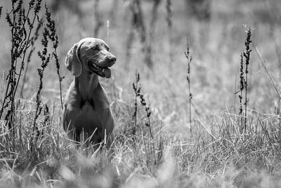Frontline Long Grass