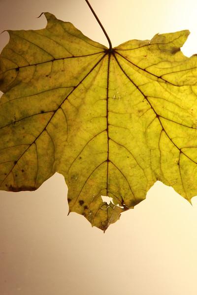 PS107.2-208.Leaf Projectf-31.jpg