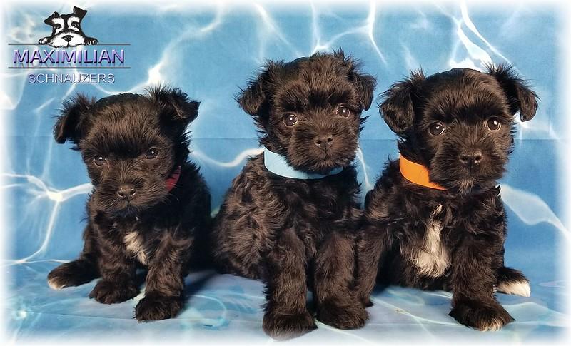 Annie Pups 019.jpg