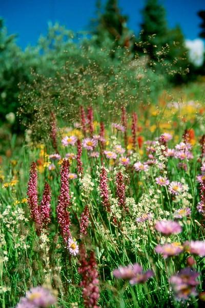 amh FLOWERS (1104).jpg
