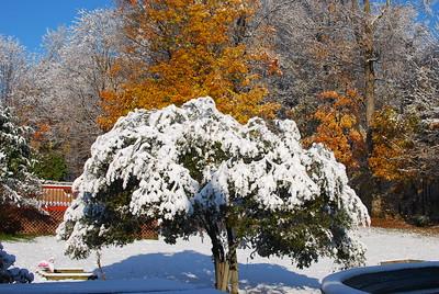 October Snowstorm - Oct 29, 2011