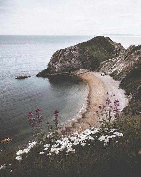 Cliff Flowers & Cliff Scenes