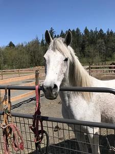 Arabian Horse Rescue of Oregon
