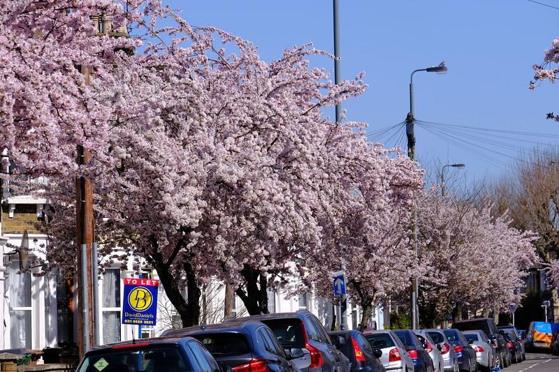 Trees in full bloom, East London, London, United Kingdom
