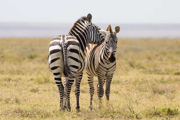 Tanzania - Serengeti National Park