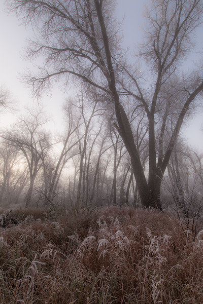 Frosty morning on the Yellowstone River bottom