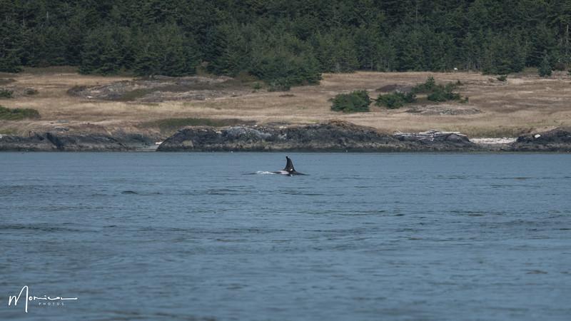 2019-08-31 - Whale Watching-1519-2_edit.jpg