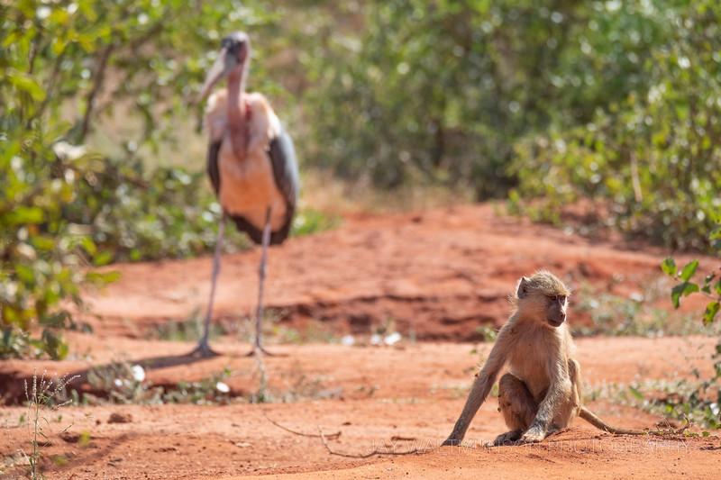 Jay Waltmunson Photography - Kenya 2019 - 192 - (DSCF5609).jpg