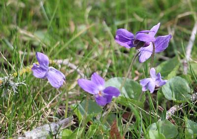 Spring Flowers 4-1-21