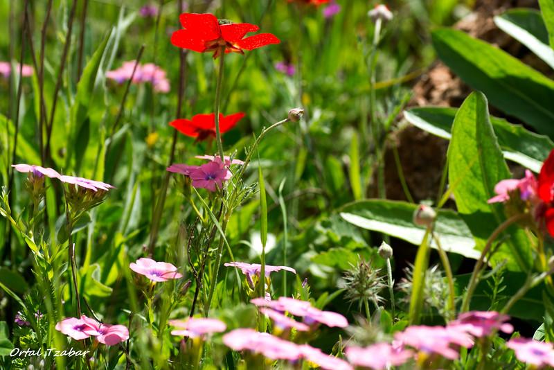 לקט פרחים.jpg