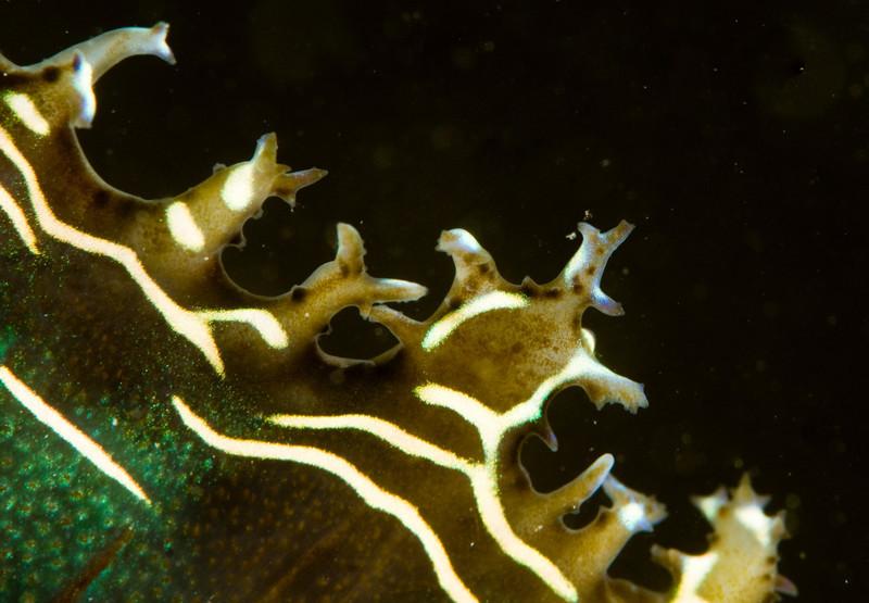 clam-4632.jpg