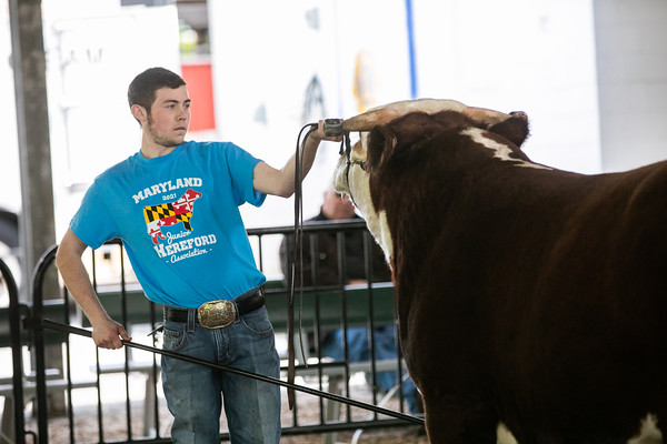 Cow/Calf & Bull Ring Shots