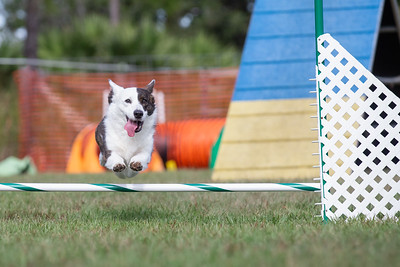 Pawsitive Action Agility 11_24_18