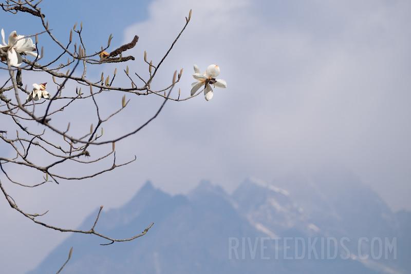 Nepal 117(20150411-DSCF1706)