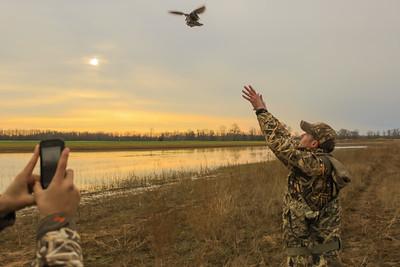 Duck Banding