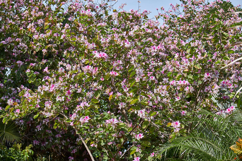 Useppa-Botanical-Walk-148.jpg