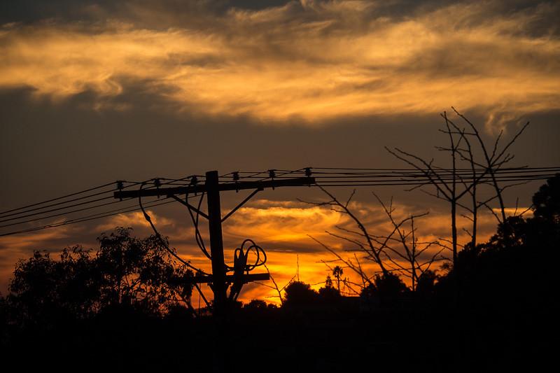 November 3 - Telephone pole and trees.jpg