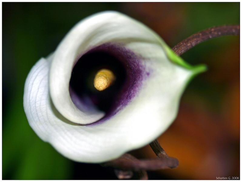 Orchid21_082209.jpg