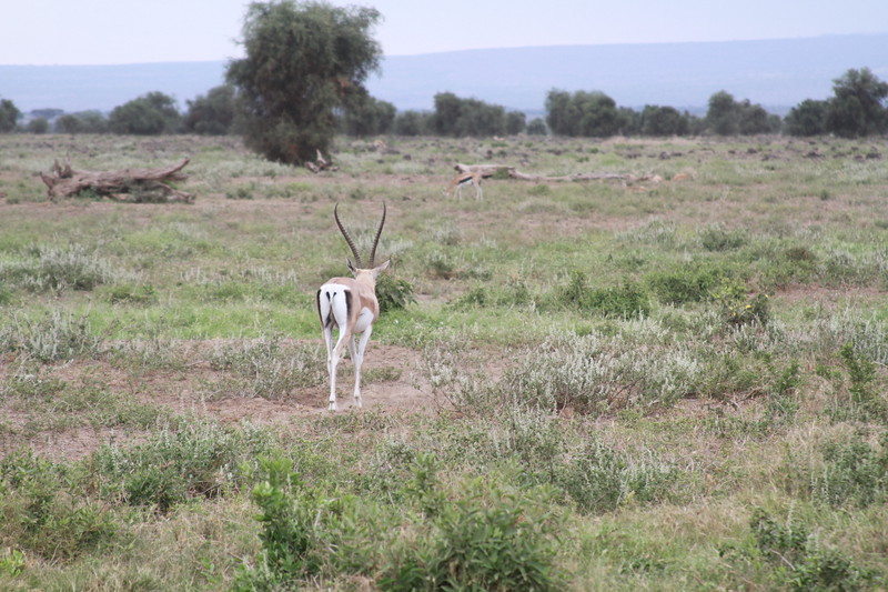 Kenya 2019 #2 1308.JPG