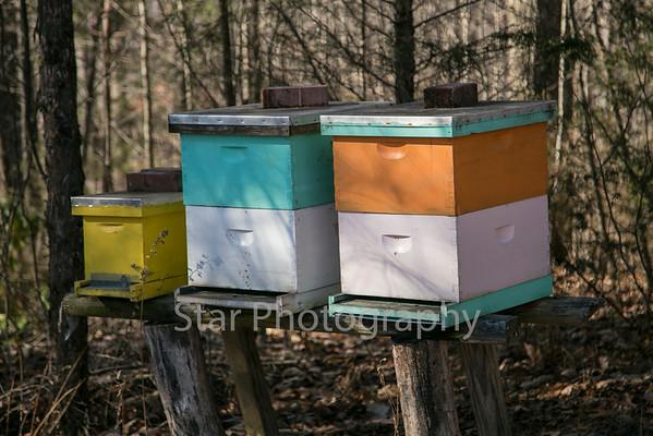Joe Shultz To Hold Beekeeping Class 02-03-15