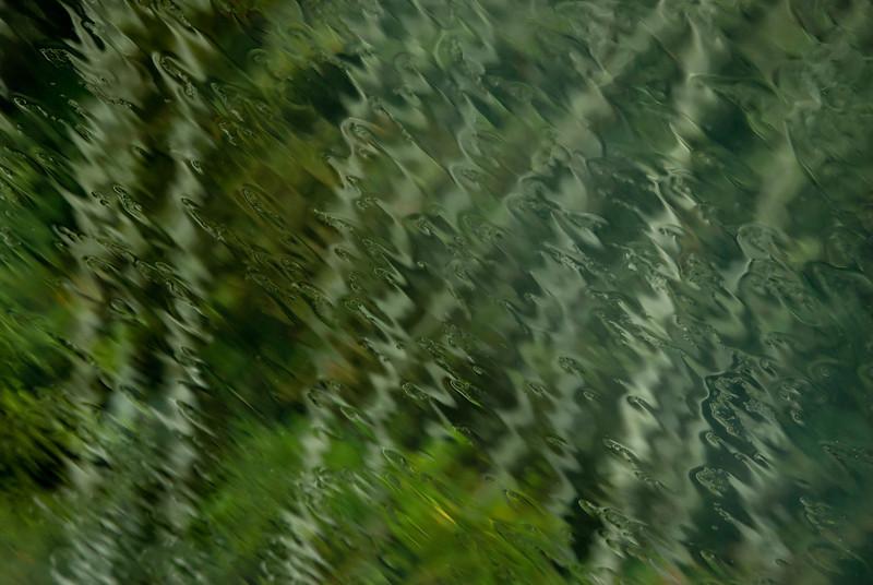 wet birch 2.jpg