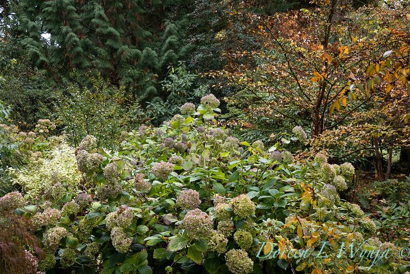 Dietrick fall garden_2067.jpg