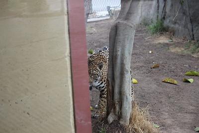SD Zoo 2017-06-29