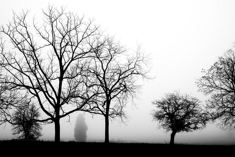 ManyBWTrees (1 of 1).jpg