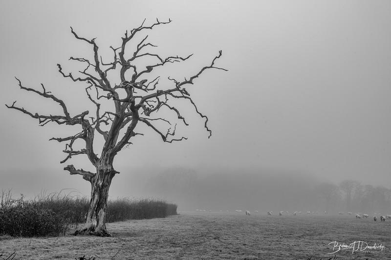 Foggy Hassocks-6925-Edit.jpg