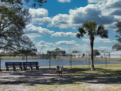 Freedom Lake Dog Park...Pinellas Park, Fl.