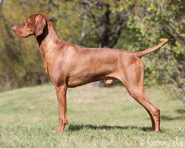 "GCh/Can Ch Captivatin' Ain't He A Knock-Ow'T ""Rocky"""