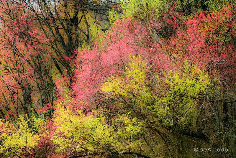 Spring Monet-aeamador_DSC0030.jpg
