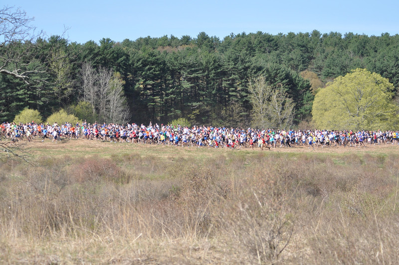Cross section of Meadow start in 2011. Photo by Tom Casper.