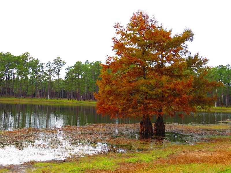 Open Pond, Conecuh National Forest, Alabama (22).JPG