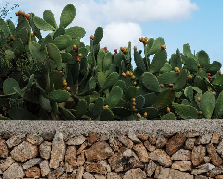 cactus road, mallorca